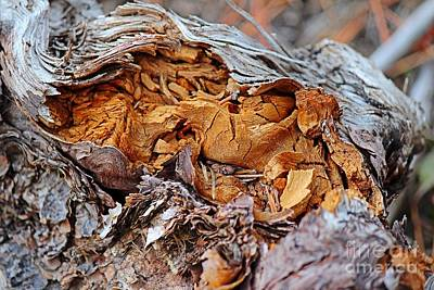 Art Print featuring the photograph Torn Old Log by Ann E Robson
