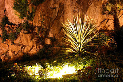 Photograph - Torquay Illuminated Gardens Landscape by Terri Waters