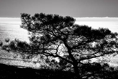 Photograph - Torrey Pine Black And White by Lee Kirchhevel