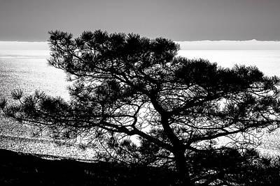 Photograph - Torrey Pine Black And White by Lee Kirchhevel