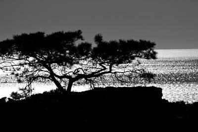 Photograph - Torrey Pine Tree 2 by Ben Graham