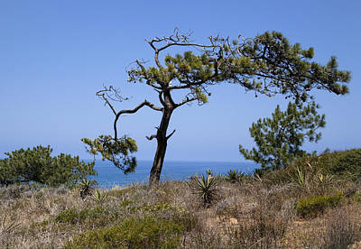 Photograph - Torrey Pines State National Reserve by Kim Swanson
