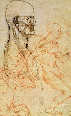 Horses Drawing - Torso Of A Man In Profile by Leonardo da Vinci