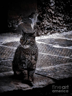 Photograph - Tortishell Cat by Karen Lewis
