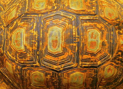 Tortoise Abstract Art Print by Ramona Johnston