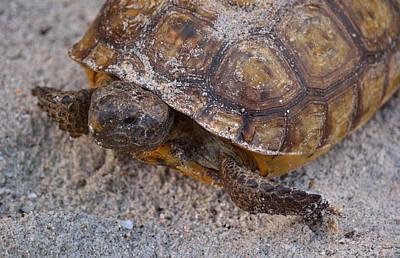Mellow Yellow - Tortoise By Nature by Patricia Twardzik