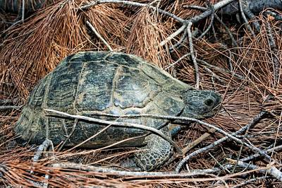 Tortoise Photograph - Tortoise In A Forest by Photostock-israel