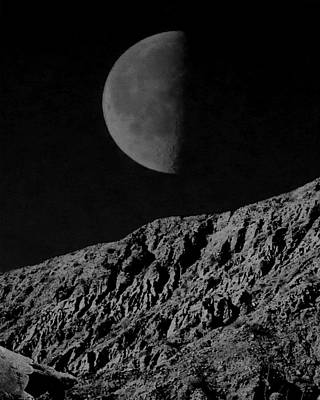 Photograph - Tortoise In The Moonlight by Timothy Bulone