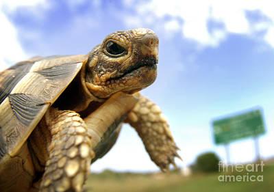 Tortoise On Roadside Art Print