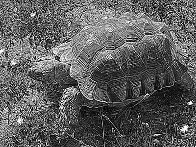 Photograph - Tortoise Patterns by Suzy Piatt