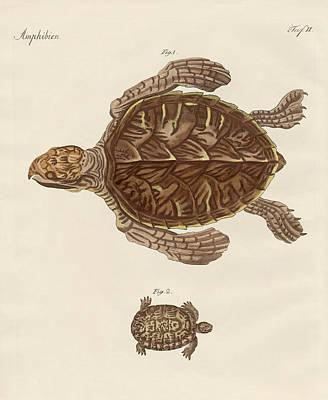 Tortoises Art Print
