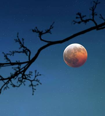 Blood Moon Photograph - Total Lunar Eclipse by Detlev Van Ravenswaay