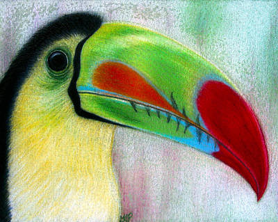 Drawing - Toucan by Jo Prevost