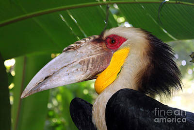 Art Print featuring the photograph Toucan by Sergey Lukashin