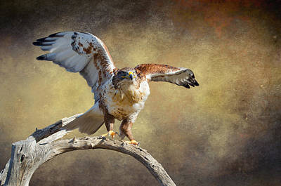 Touch Down Art Print by Barbara Manis
