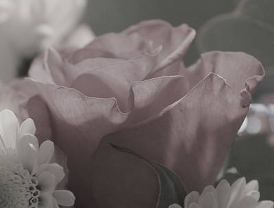 Photograph - Touch Me Softly by Trent Mallett