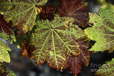 Photograph - Touch Of Autumn by Stuart Gordon