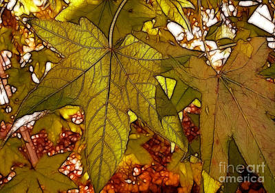Photograph - Touch Of Fall by Kathy Baccari
