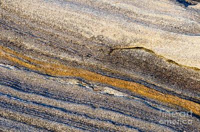 Photograph - Touch Of Gold by Tamara Becker