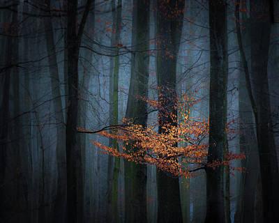 Morning Light Wall Art - Photograph - Touch Of Winter Sun by Marek Boguszak
