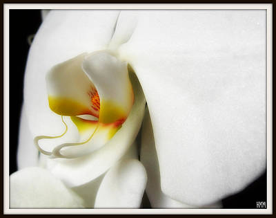 Art Print featuring the photograph Touch Of Yellow by Heidi Manly