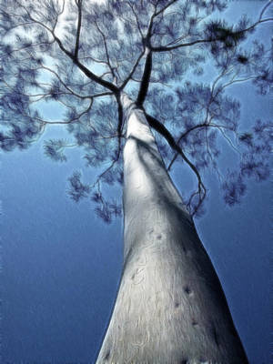 Digital Art - Touch The Sky by Photographic Art by Russel Ray Photos