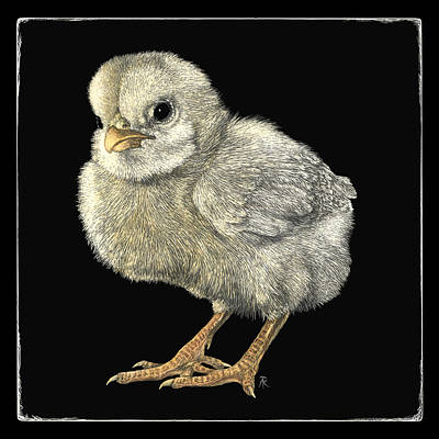 Drawing - Tough Chick by Ann Ranlett