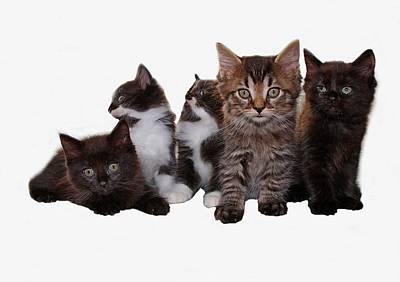 Photograph - Tough Titty Said The Kitties by Davandra Cribbie