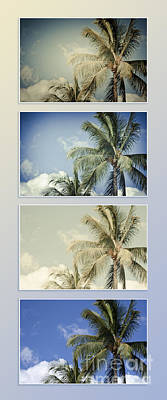 Photograph - Toujours Subtile Et Surprenante Couleurs - Hawaiian Coconut Palms - Niu - Cocos Nucifera by Sharon Mau