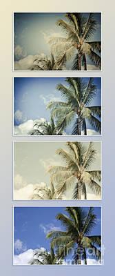 Coconuts Digital Art - Toujours Subtile Et Surprenante Couleurs - Hawaiian Coconut Palms - Niu - Cocos Nucifera by Sharon Mau