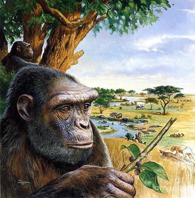 Toumai Sahelanthropus Tchadensis Art Print by Publiphoto