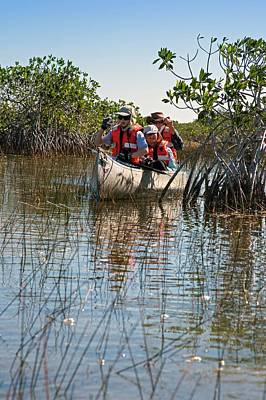 Tourists Canoeing In Mangrove Swamp Art Print by Jim West