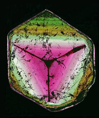 Tourmaline Photograph - Tourmaline Cross Section by Dirk Wiersma