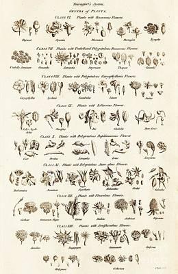 Genus Photograph - Tournefort's Genera Of Plants by David Parker