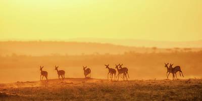 Antelope Wall Art - Photograph - Towards Sunset by John Fan