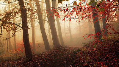 Autumn Photograph - Towards The Light. by Leif L?ndal