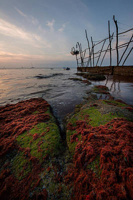 Alga Photograph - Towards The Night by Davorin Mance