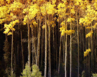 Photograph - Towering Aspen In Autumn by Ann Powell