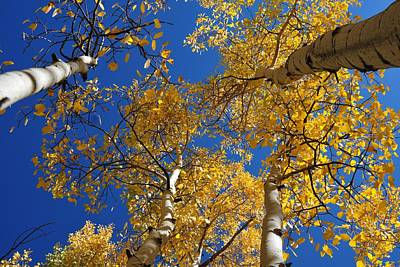 Photograph - Towering Autumn Aspens by Marilyn Burton
