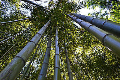 Photograph - Towering Bamboo by Holly Blunkall