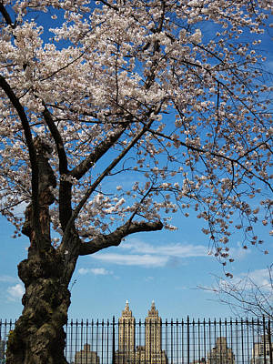 Photograph - Towering Blossoms by Cornelis Verwaal