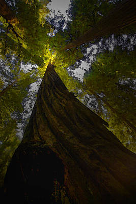 Photograph - Towering Giants by Kandy Hurley