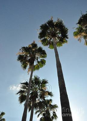 Art Print featuring the photograph Towering Palms by John Black