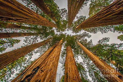 Photograph - Towering Pines by Charles Garcia