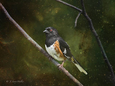 Digital Art - Towhee Waiting For Sunrise by J Larry Walker