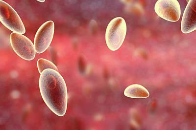 Toxoplasma Gondii Parasites Art Print by Kateryna Kon