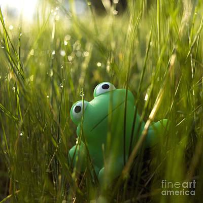 Frog Photograph - Toy Frog In The Wet Grass by Bernard Jaubert
