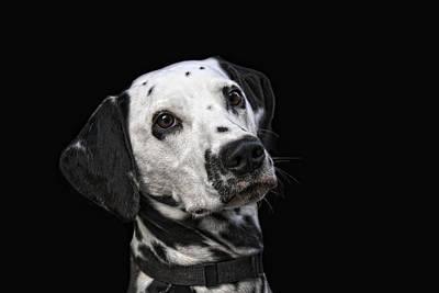 Dalmatian Photograph - Toya by Joachim G Pinkawa