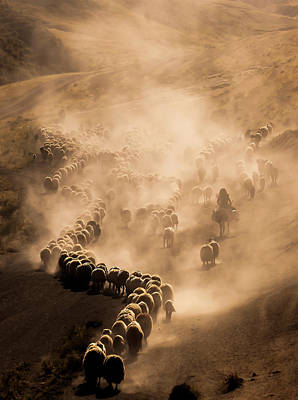 Cattle Photograph - Tozlu Yolculuk by Murat Cacim