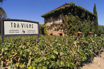 Pastoral Vineyard Photograph - Tra Vigne Restaurant In St Helena Napa California Dsc1685 by Wingsdomain Art and Photography